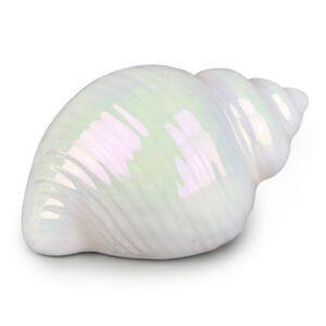 Dommio Dekoratívna mušľa Mare, 10 cm